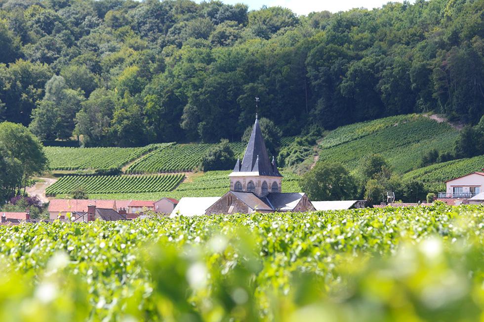 Trépail entre vigne & foret sur la route Touristique du Champagne